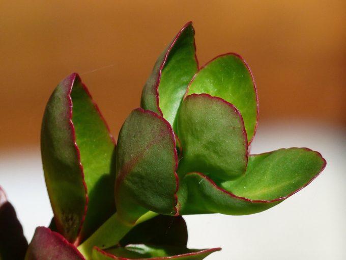 Zelfvoorzienende plant in stolp