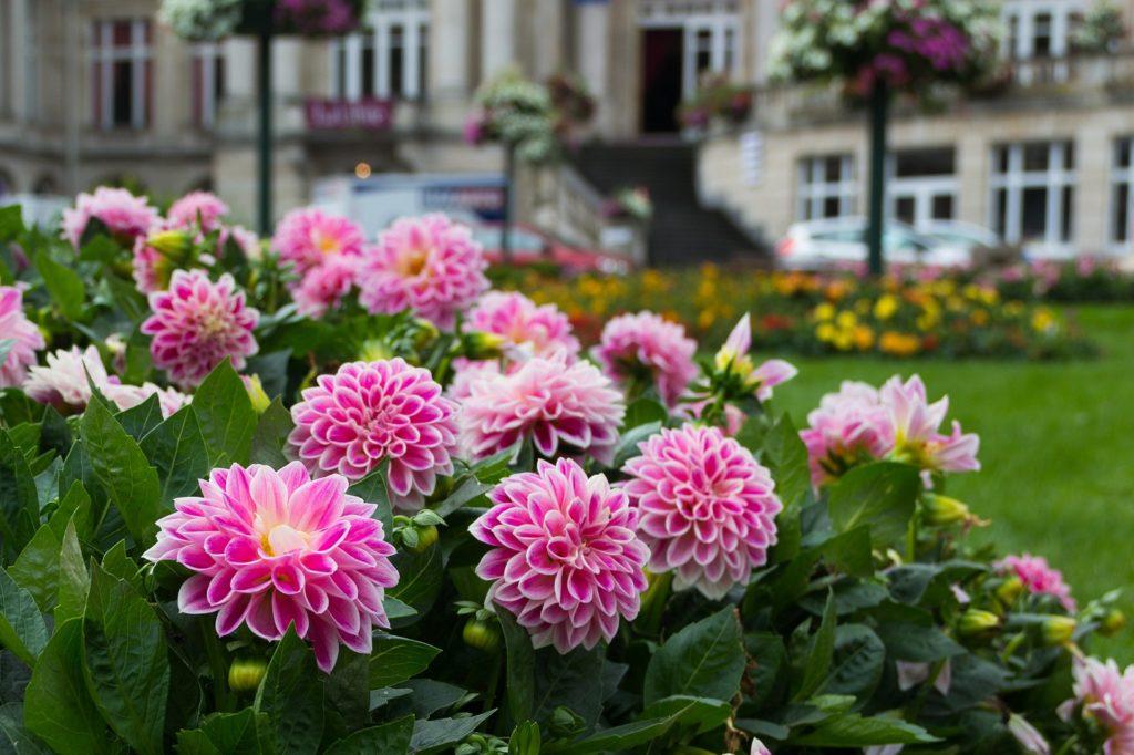 Voor wat voor type tuin kies jij?