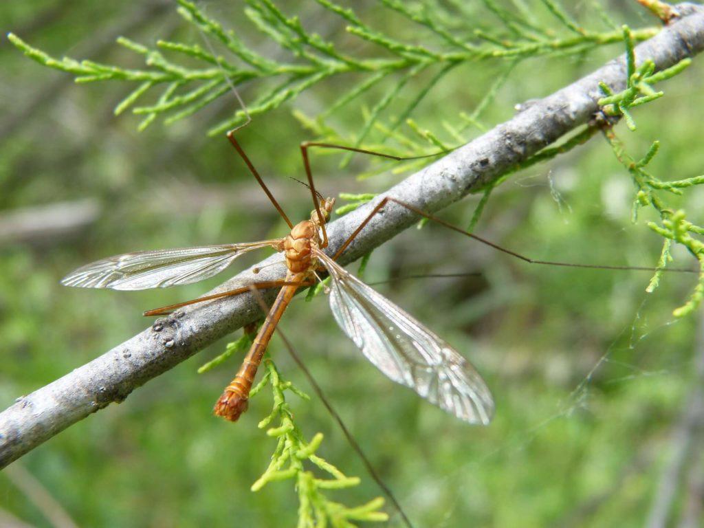 hoe muggen bestrijden